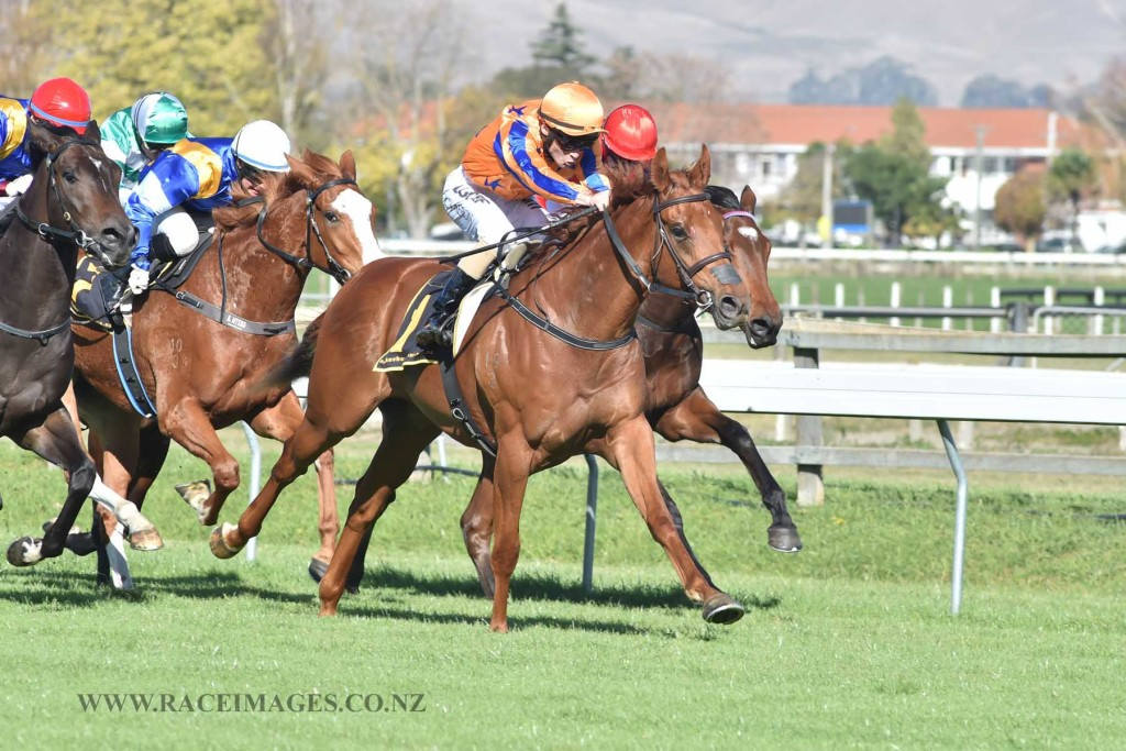 GINGERNUTS - HAWKES BAY 19-5-2016 RACE IMAGES
