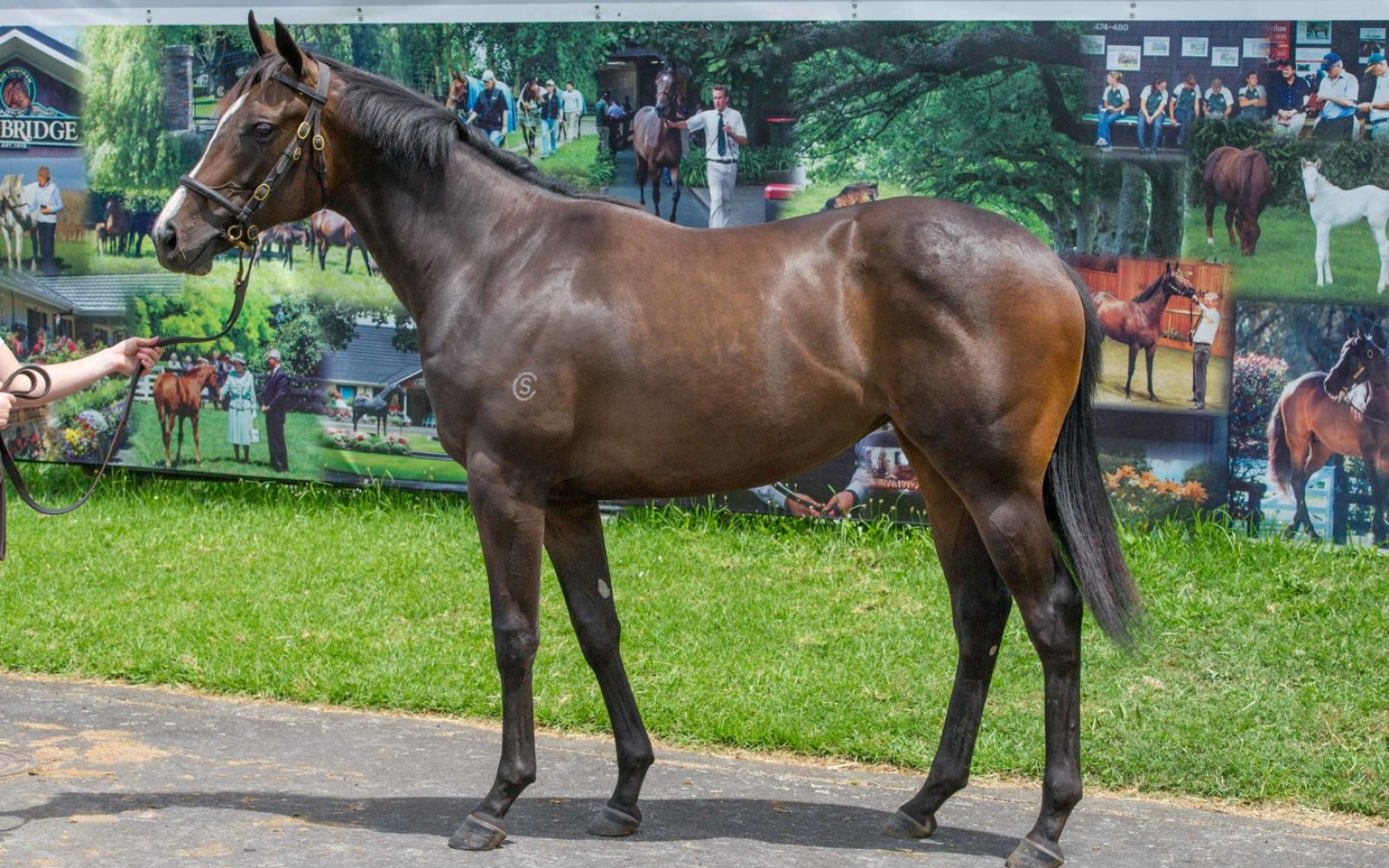 Karaka 18 – Lot 525 Power (GB) – Romantic Time, Brown Filly