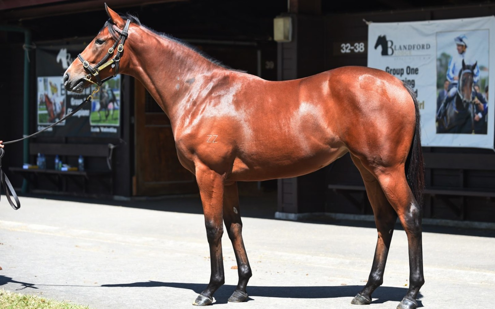 Karaka 18 – Lot 371 Not a Single Doubt (AUS) – Meleka Belle, Bay Filly