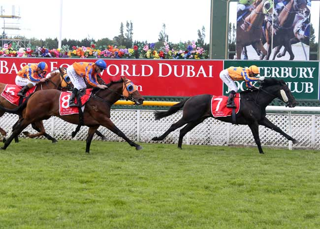 Embellish to Stand at Cambridge Stud