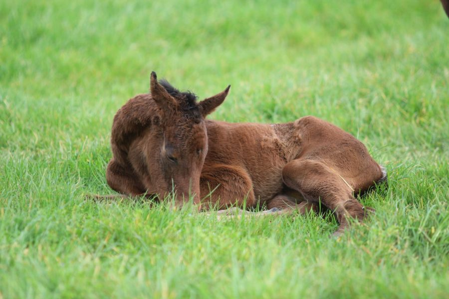 "Spring is in the Air – it's ""Foal Fever"""