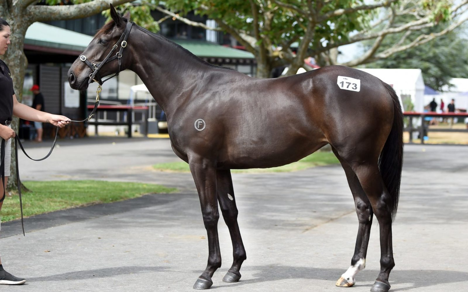 KARAKA 19 – Lot 173 Proisir (AUS) – Light Source, Brown Filly