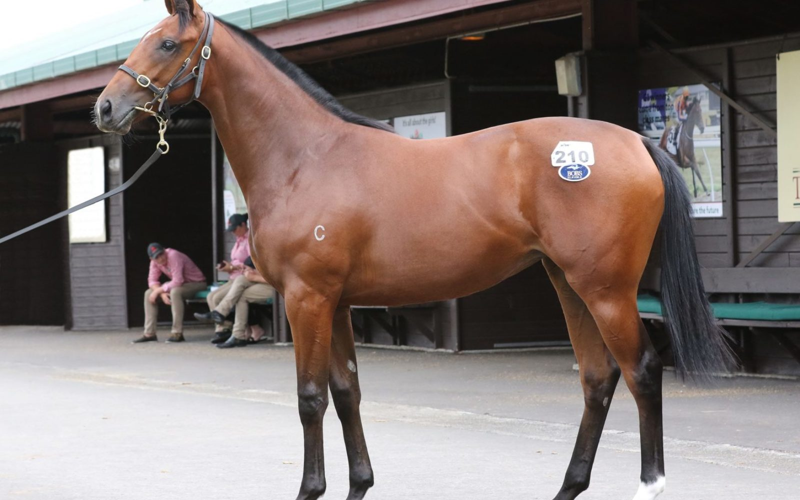 KARAKA 19 – Lot 210 Vancouver (AUS) – Mexican Rose, Bay Filly
