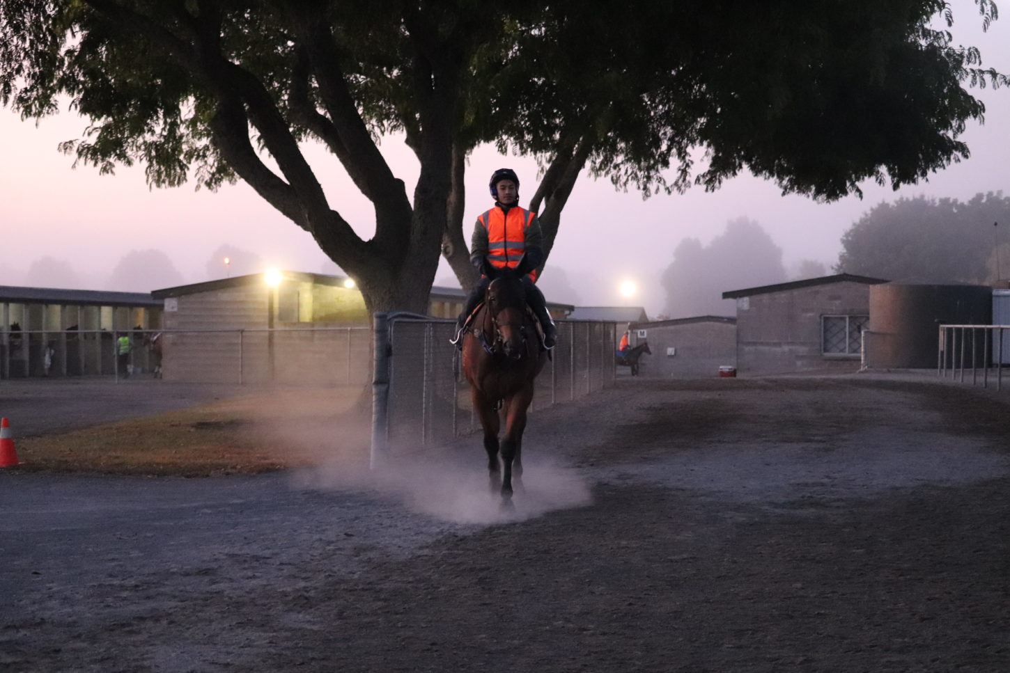 Te Akau Tuesday Trackwork