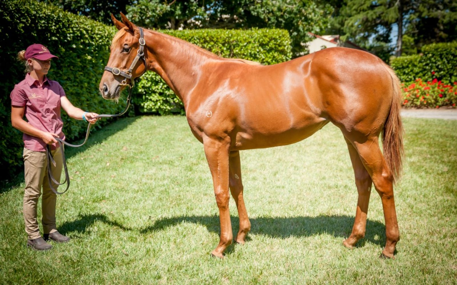 KARAKA 19 – Lot 895 Proisir (AUS) – Sarsarun, Chestnut Filly