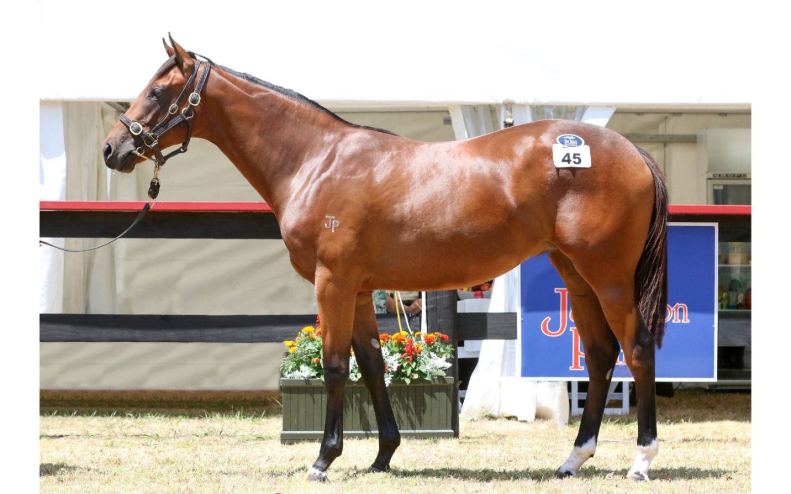 Karaka 2020 – Lot 45 Astern (AUS) – Landslide (USA), Bay Filly