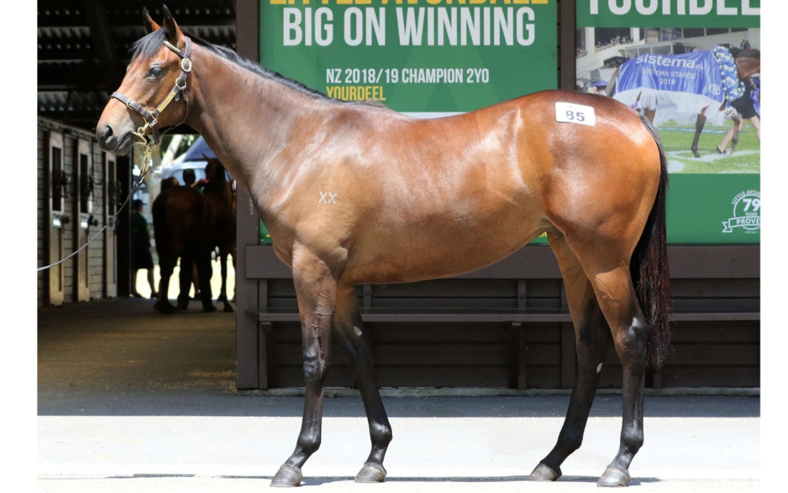 Karaka 2020 – Lot 85 Savabeel (AUS) – Matakana, Brown Filly