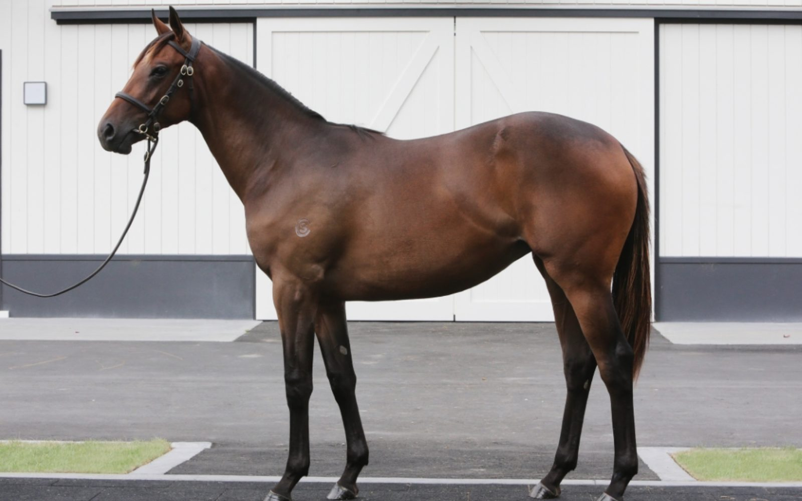 Karaka 2020 – Lot 283 Savabeel (AUS) – Silk Pins, Bay Filly