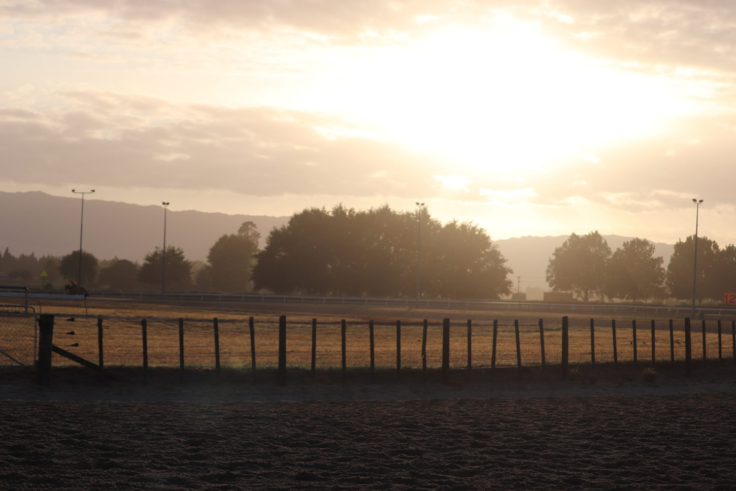 Te Akau Weekend Trackwork