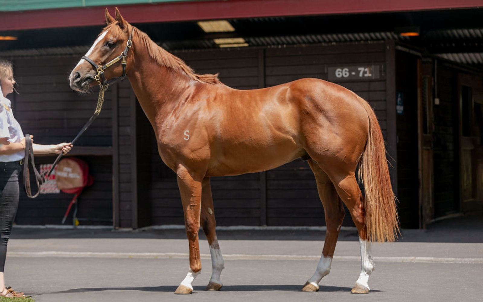 READY TO RUN – Lot 57 Shooting to Win (AUS) – Sehaab (AUS), Chestnut Colt