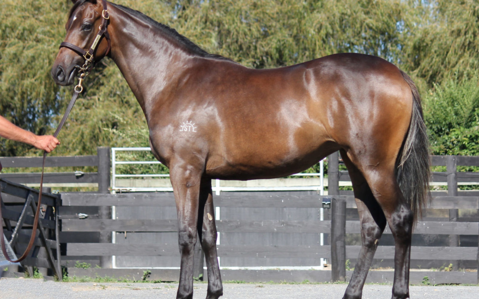 KARAKA – Lot 823 Burgundy (NZ) – High Heels (NZ), Bay Filly