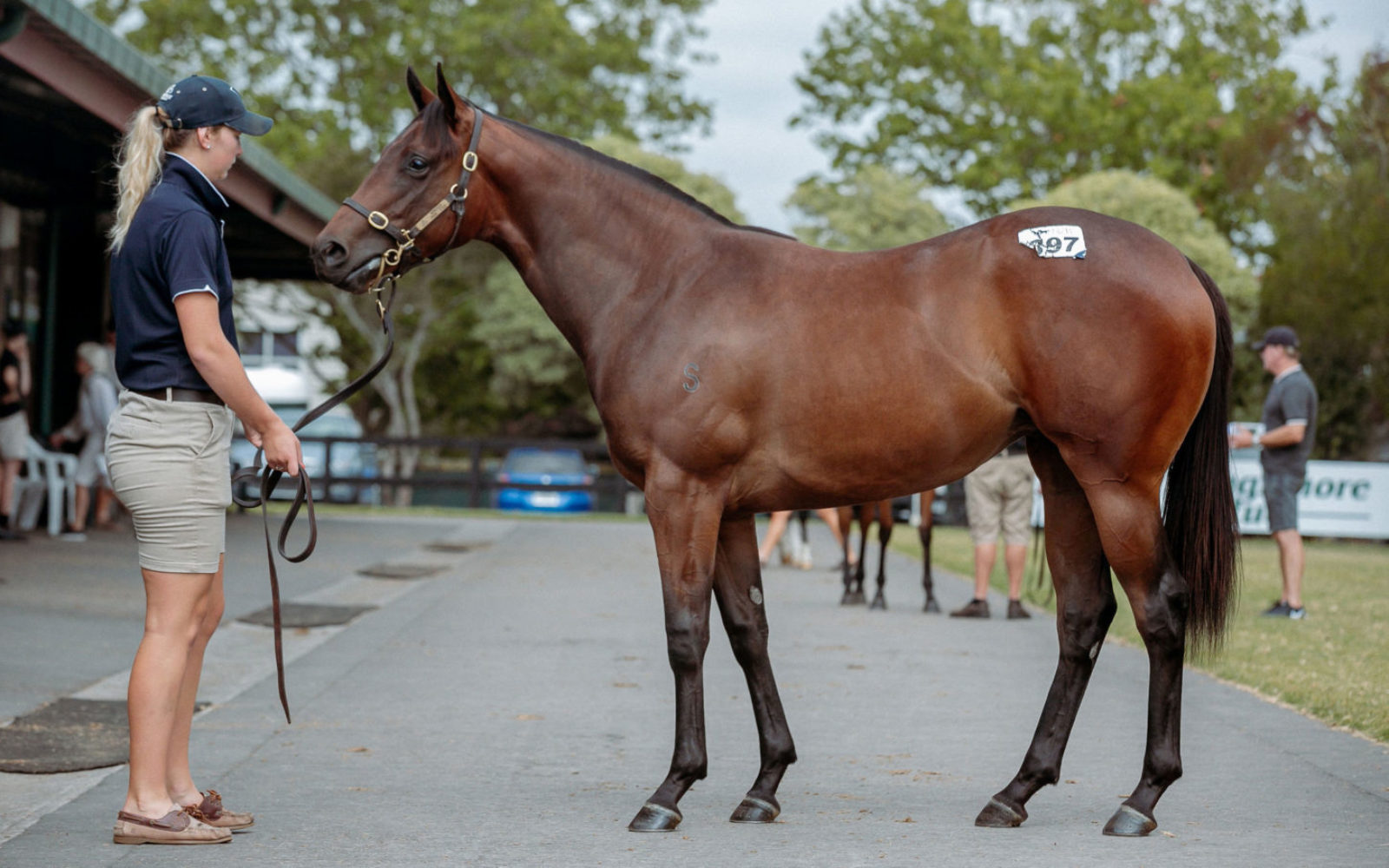 KARAKA – Lot 397 Russian Revolution (AUS) – Fastnet Rose (AUS), Bay Filly