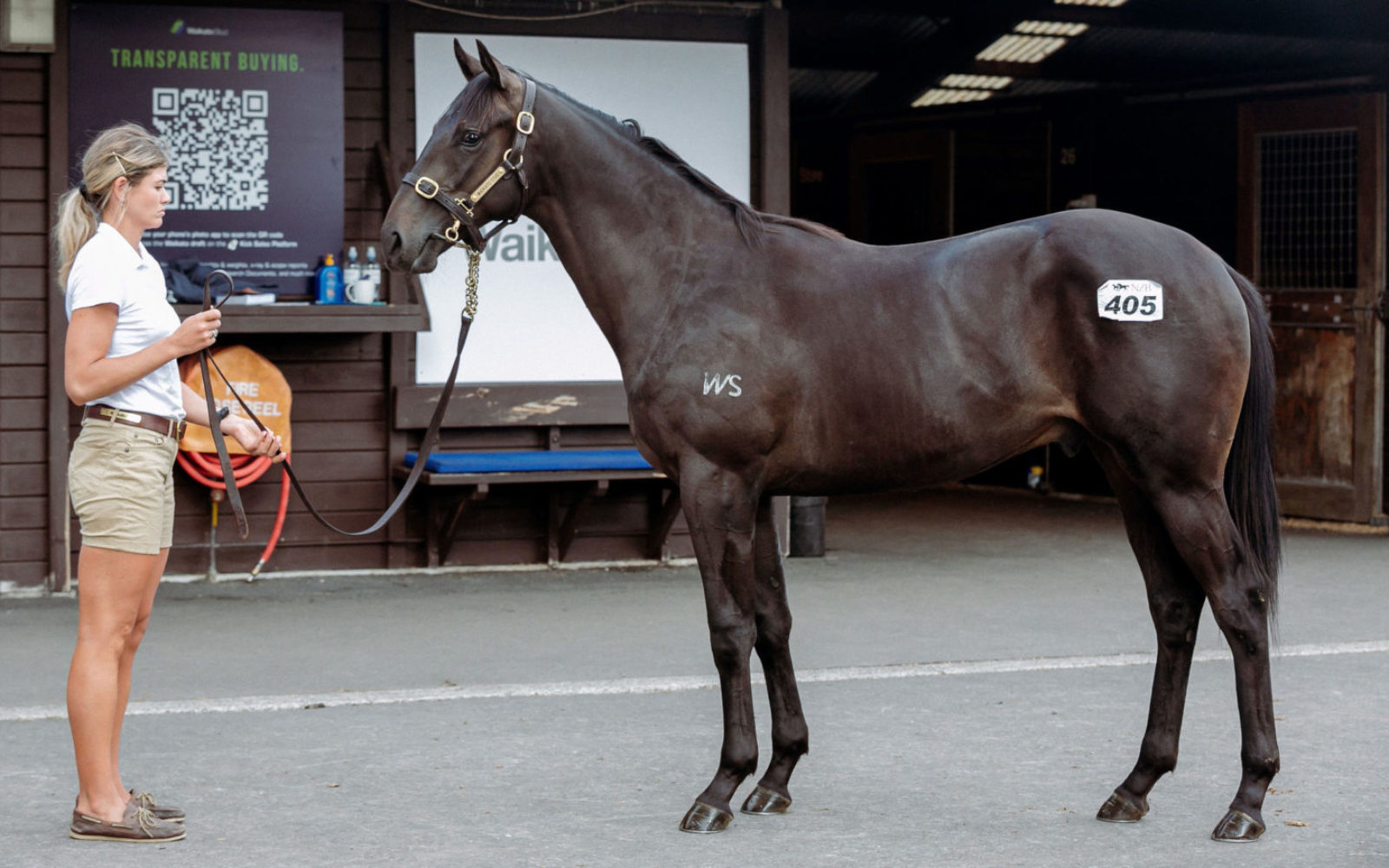 KARAKA – Lot 405 Savabeel (AUS) – Flamingo (NZ), Brown Colt