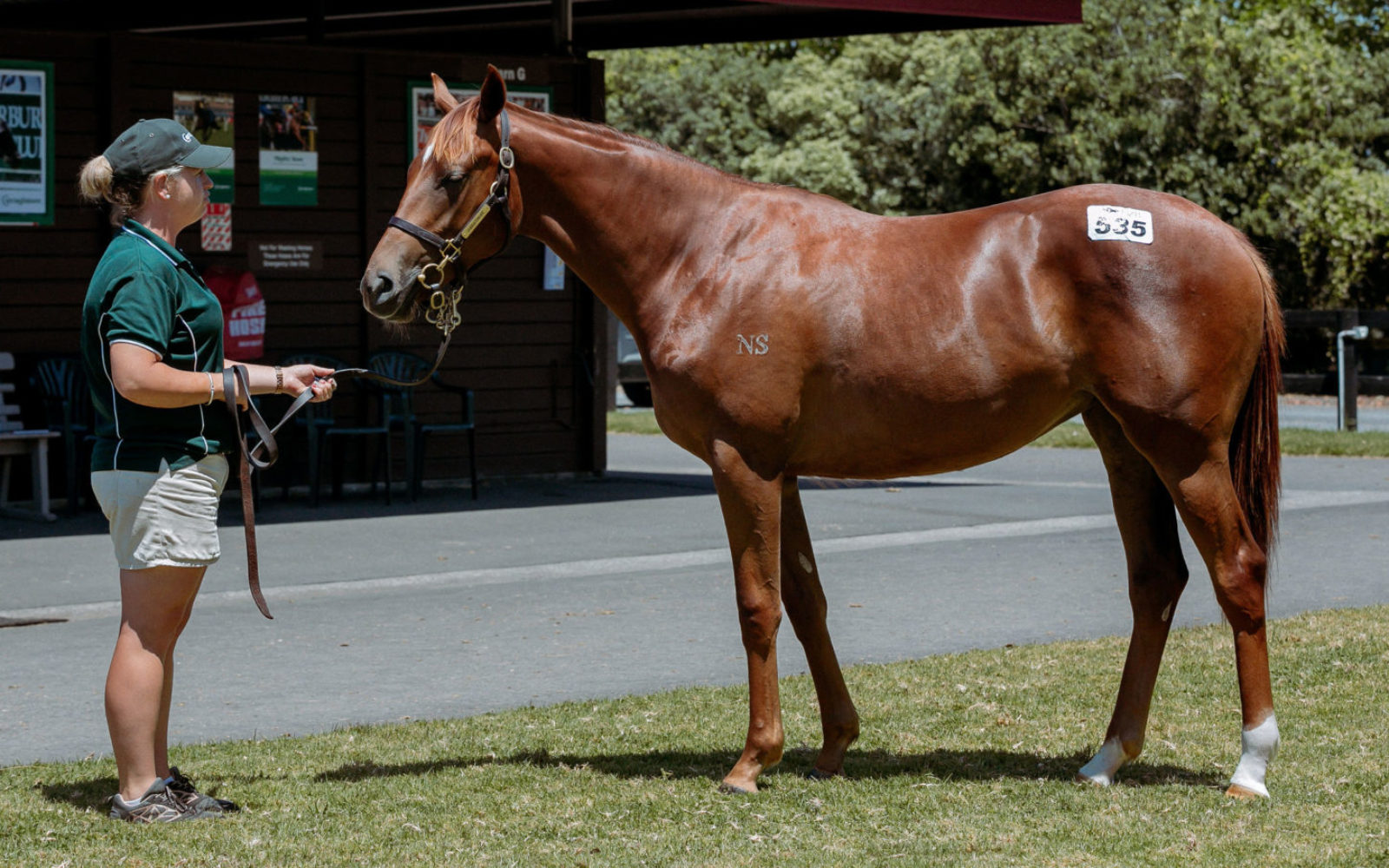 KARAKA – Lot 535 Almanzor (FR) – Miraculous Miss (AUS), Chestnut Filly
