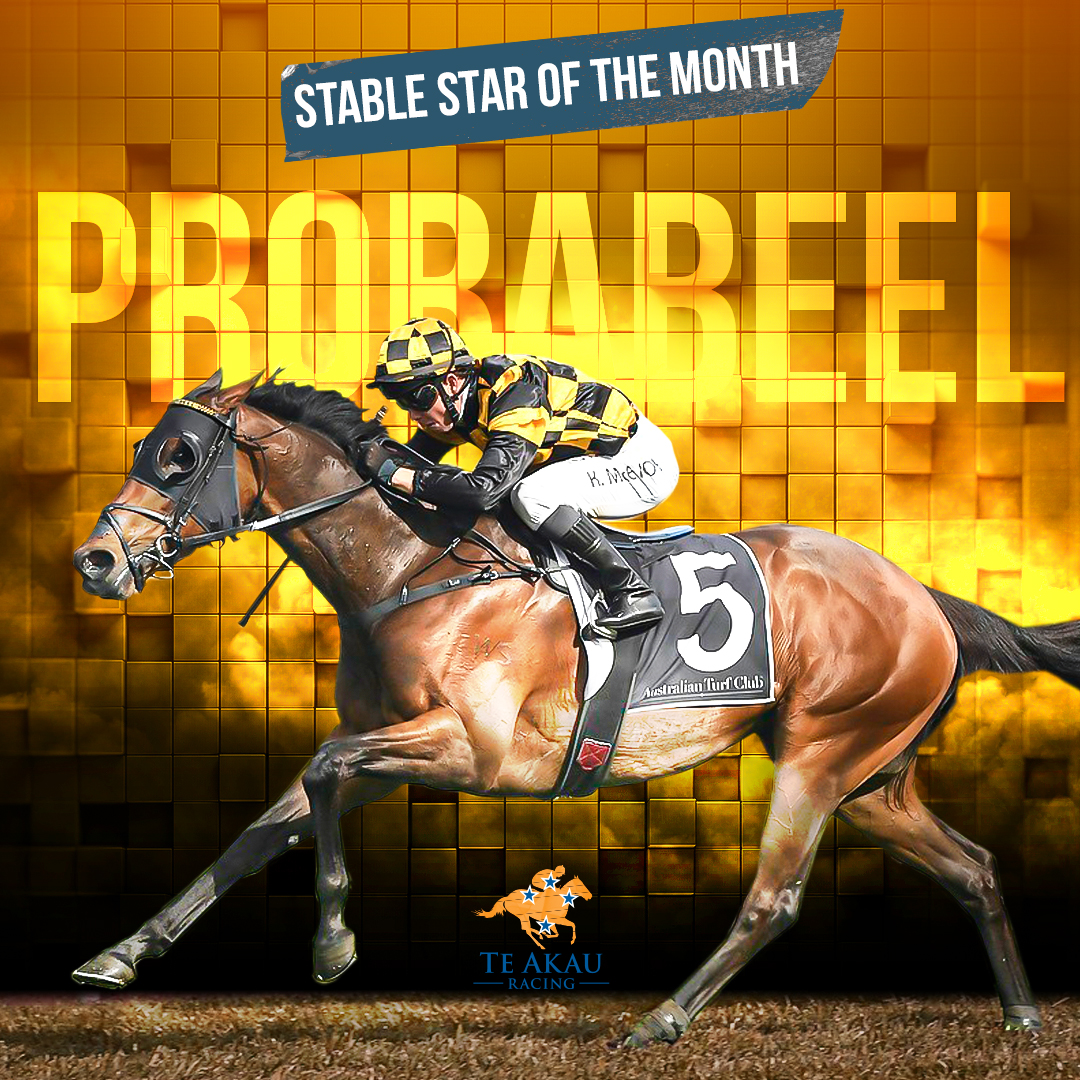 Te Akau Stable Star Of The Month – Probabeel
